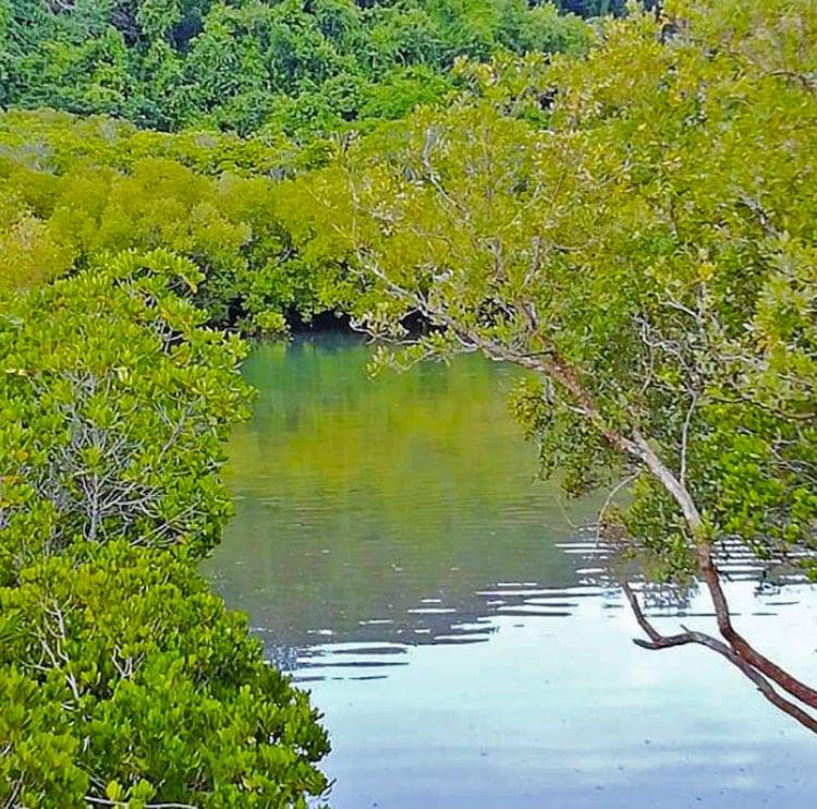 Read more about the article l'île de Mayotte en BREF